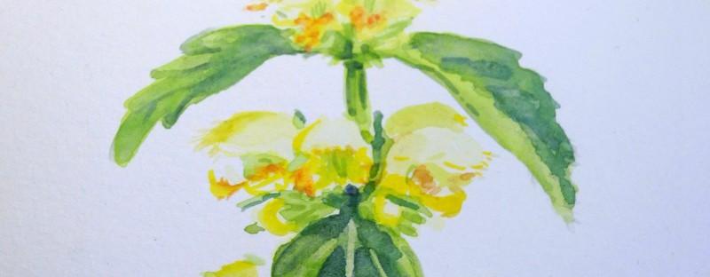 Watercolor Tutorial Goldnessel Aquarell