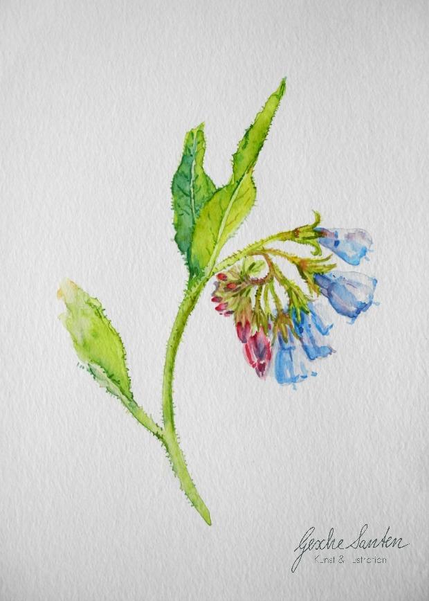 Pflanzen- und Blumenaquarelle im Mai