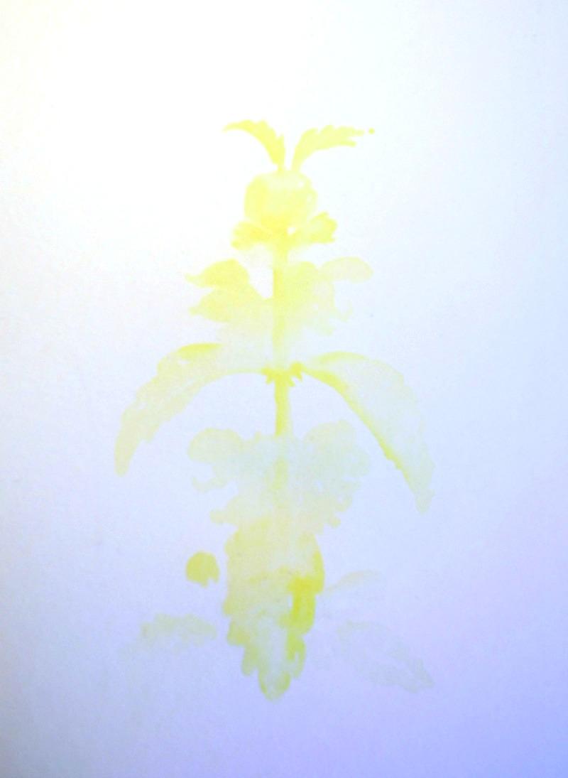 Goldnessel-Aquarell ohne Vorzeichnen - Schritt für Schritt erklärt Beim Spazierengehen sind mir diese Goldnesseln (Lamium galeobdolon) ins Auge gefallen. Sofort hatte ich Lust sie zu malen. Gleichzeitig war mir aber nicht nach langem Vorzeichnen... Kein Problem botanische Aquarell gehen auch locker und freihändig ohne Vorzeichnen.