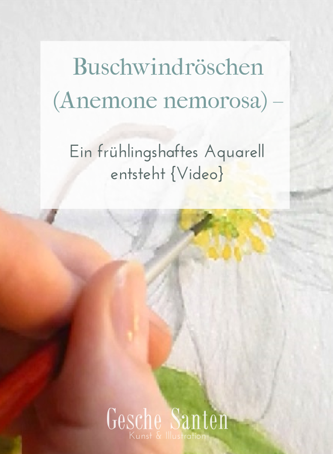 Buschwindröschen Anemone nemorosa - Aquarell- Video, Schritt für Schritt