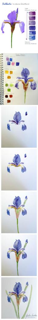 Iris Aquarell | Gesche Santen Blog