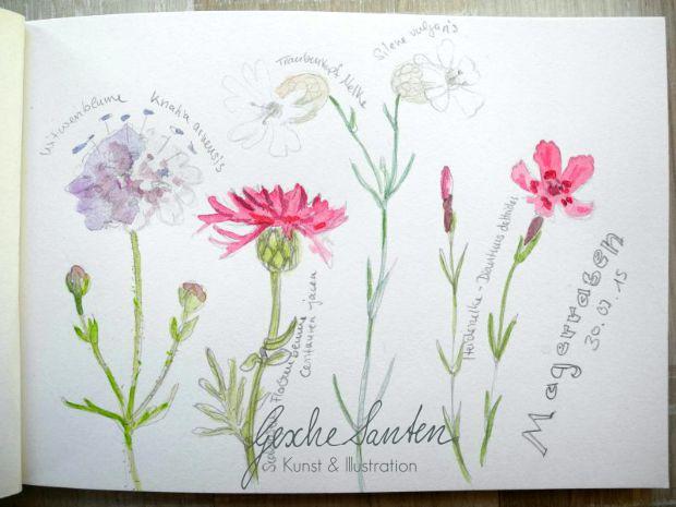 Naturskizzenbuch | Gesche Santen Blog