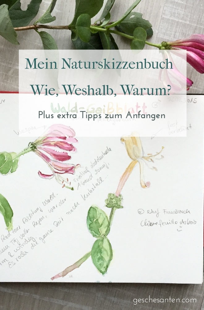 """Naturskizzenbuch führen. Eine Einführung in """"nature journaling"""" mit Beispielen aus meinem Natur inspirierten Skizzenbuch. Klicke für mehr Infos oder pinne für später."""