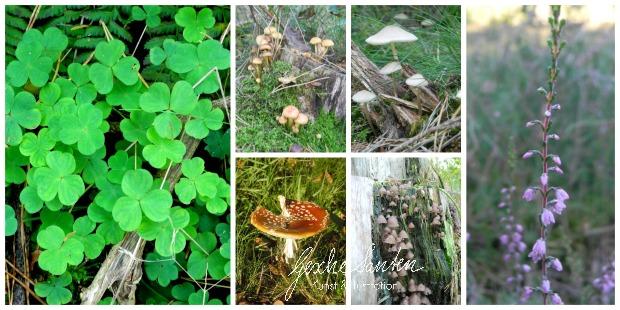 Vom Spaziergang zum Aquarell – Naturerlebnisse kreativ festhalten - Ein Herbsttag im Wald   Gesche Santen Blog