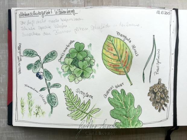Skizzenbuch Natur, Herbstwald, Aquarellskizzen, Aquarell