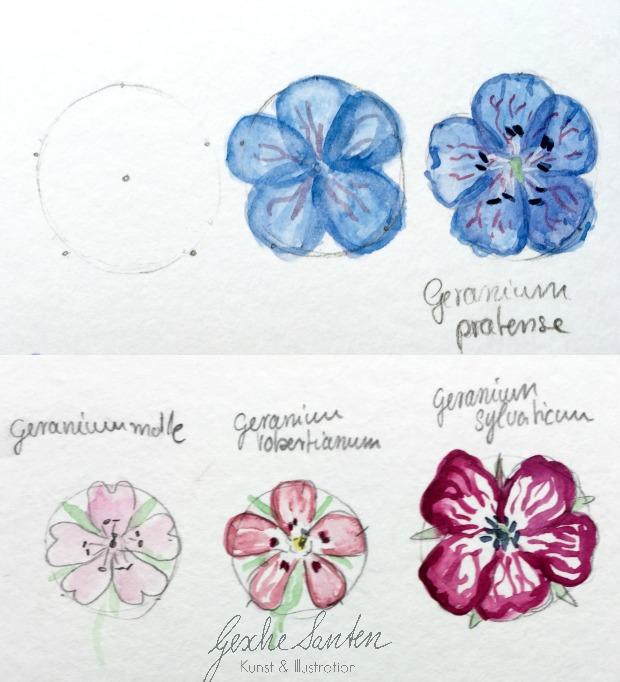 Botanik für Künstler – Wie kann floristisches Wissen Deinen Zeichnungen und Aquarellen helfen kann , Blumen malen, Aquarell  Gesche Santen Blog