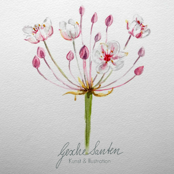 Juni in Fotos – Schwanenblume Aquarell