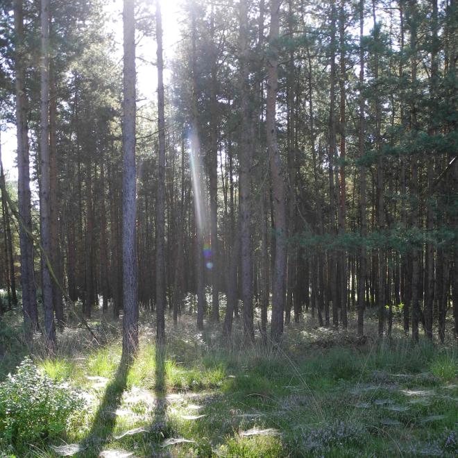 Inspirations fürs Naturskizzenbuch: Spätsommerwald