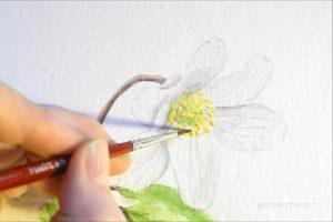 Buschwindröschen Anemone Aquarell, Video, Schritt für Schritt, Blumen malen