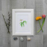 anemone-5