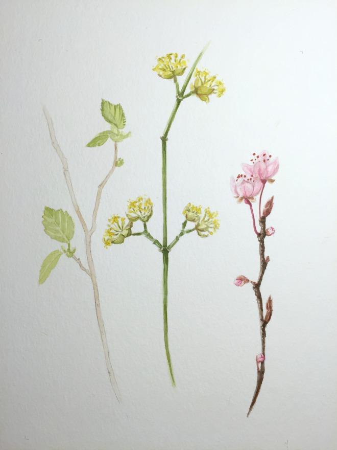 Natur im März: Frühlingszweige in Aquarell: Haselnuss, Kornelkirsche, Pflaumenblüte
