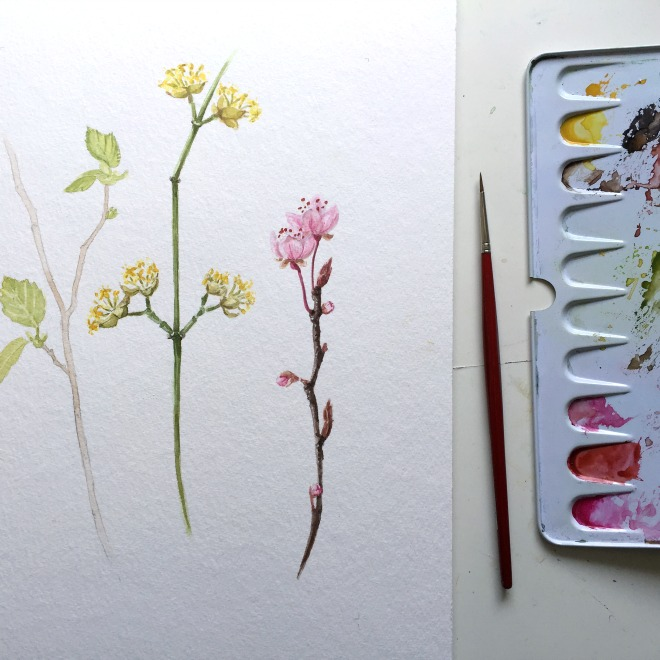 Natur im März: Frühlingszweige in Aquarell