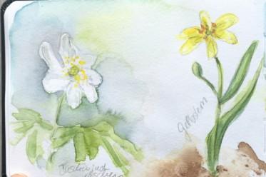 Ein Spaziergang im Frühlingswald - Kleine botanische Entdeckungsreise und Skizzenbuch-Inspiration