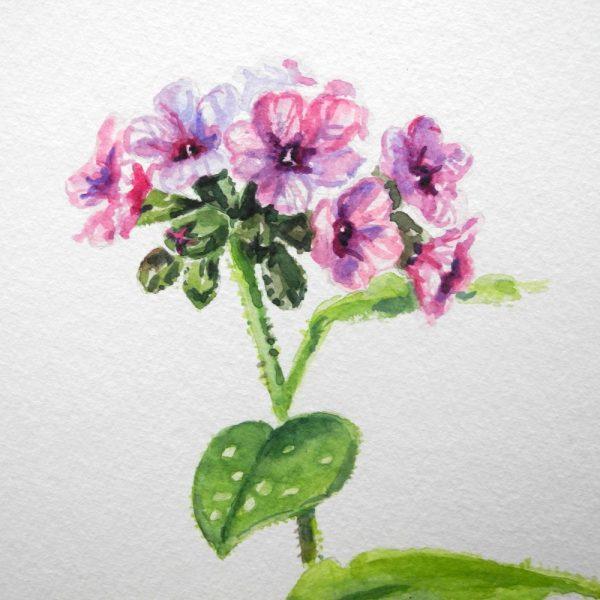 Lungenkraut, Aquarell, Blumen Aquarell