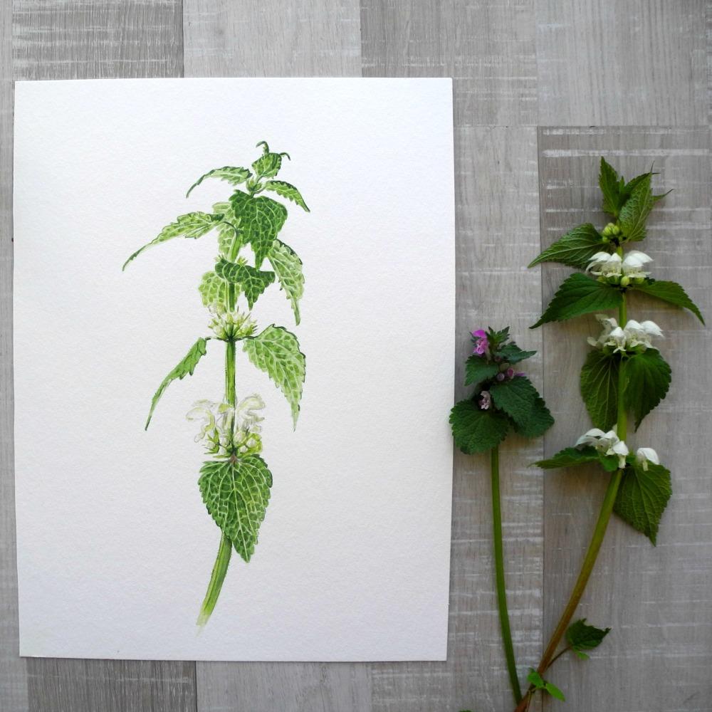 Weiße Taubnessel Aquarell, Blumen Aquarell