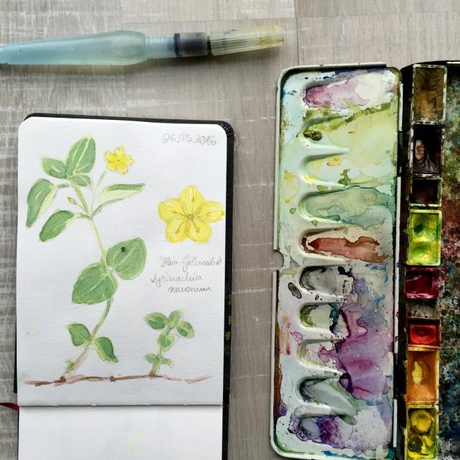 Komm mit mir auf eine kleine botanische Exkursion in einen Eichen-Buchen-Mischwald {Video}
