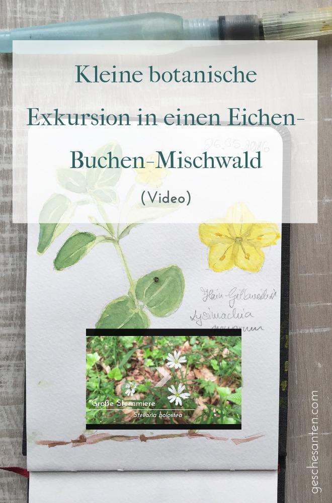 Komm mit mir auf eine kleine botanische Exkursion in einen Eichen-Buchen-Mischwald Begleite mich, wie ich durch einen Eichen-Mischwald im Münsterland laufe und Dir ein paar typische Pflanzenarten zeige. Im Anschluss halte ich das Erlebnis mit Aquarell in meinem Natur-Skizzenbuch fest.