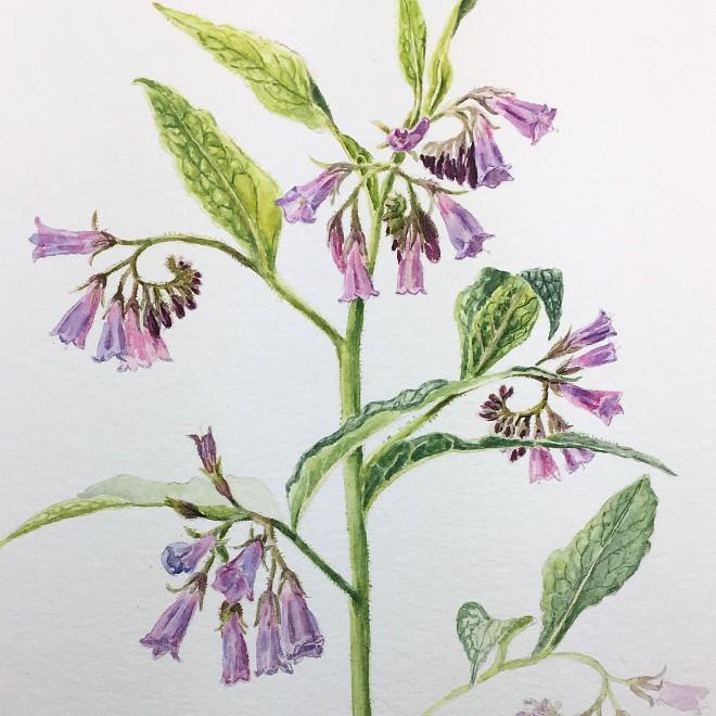 Wie meine botanischen Aquarelle entstehen – von der Inspiration bis zum letzten Pinselstrich