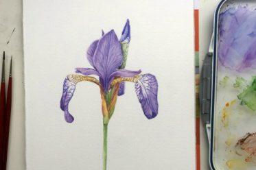 Iris-Aquarell-660-beitragsbild
