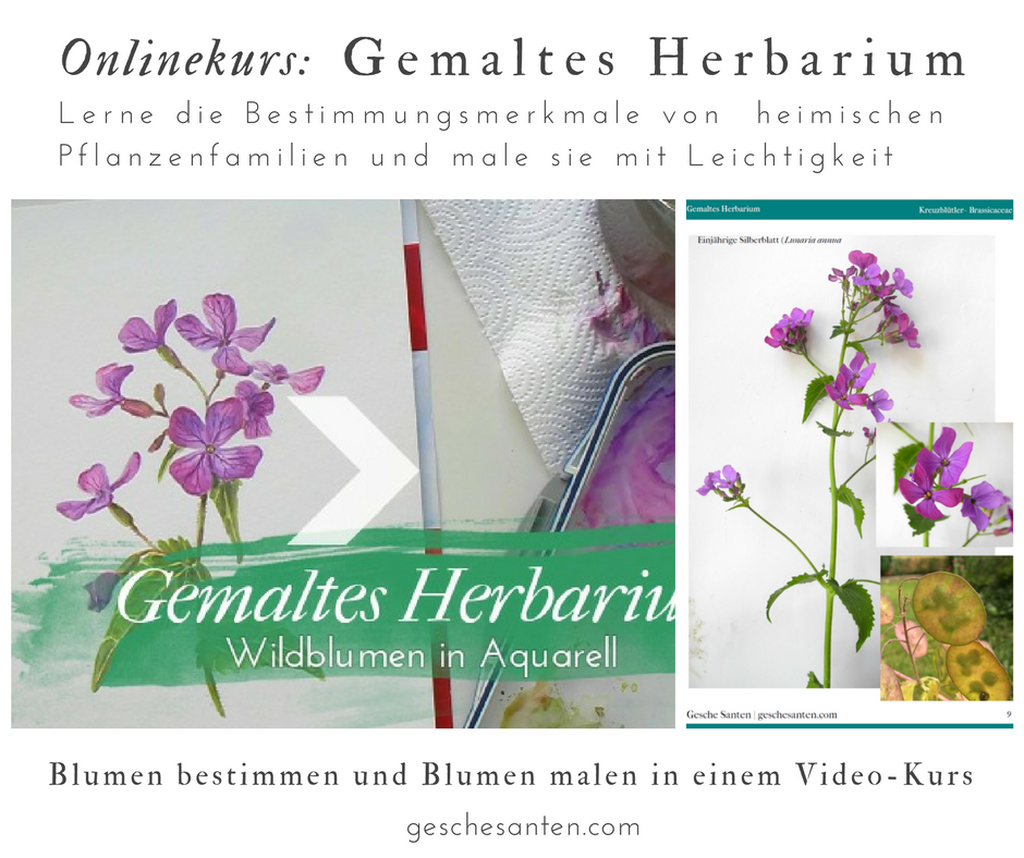 Onlinekurs Blumen malen Video: Gemalten Herbarium- Wildblumen in Aquarell von Gesche Santen