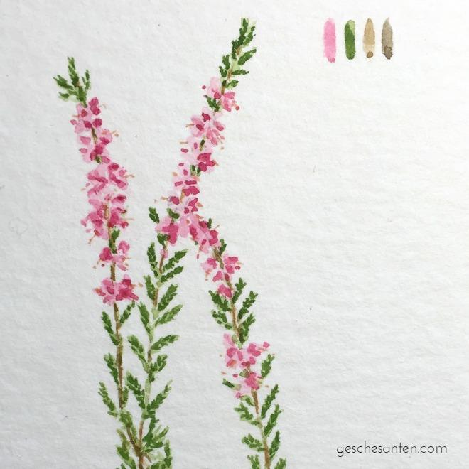 Heideblüte-Aquarell-2-660
