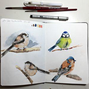 Vögel in Aquarell im Skizzenbuch