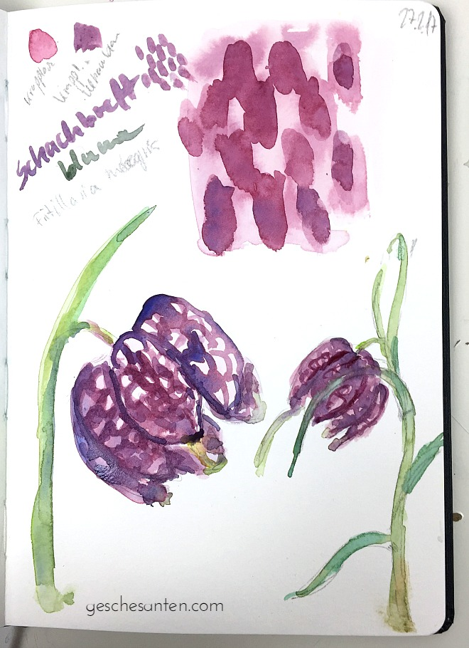Schachbrettblume in Aquarell - Naturskizzenbuch