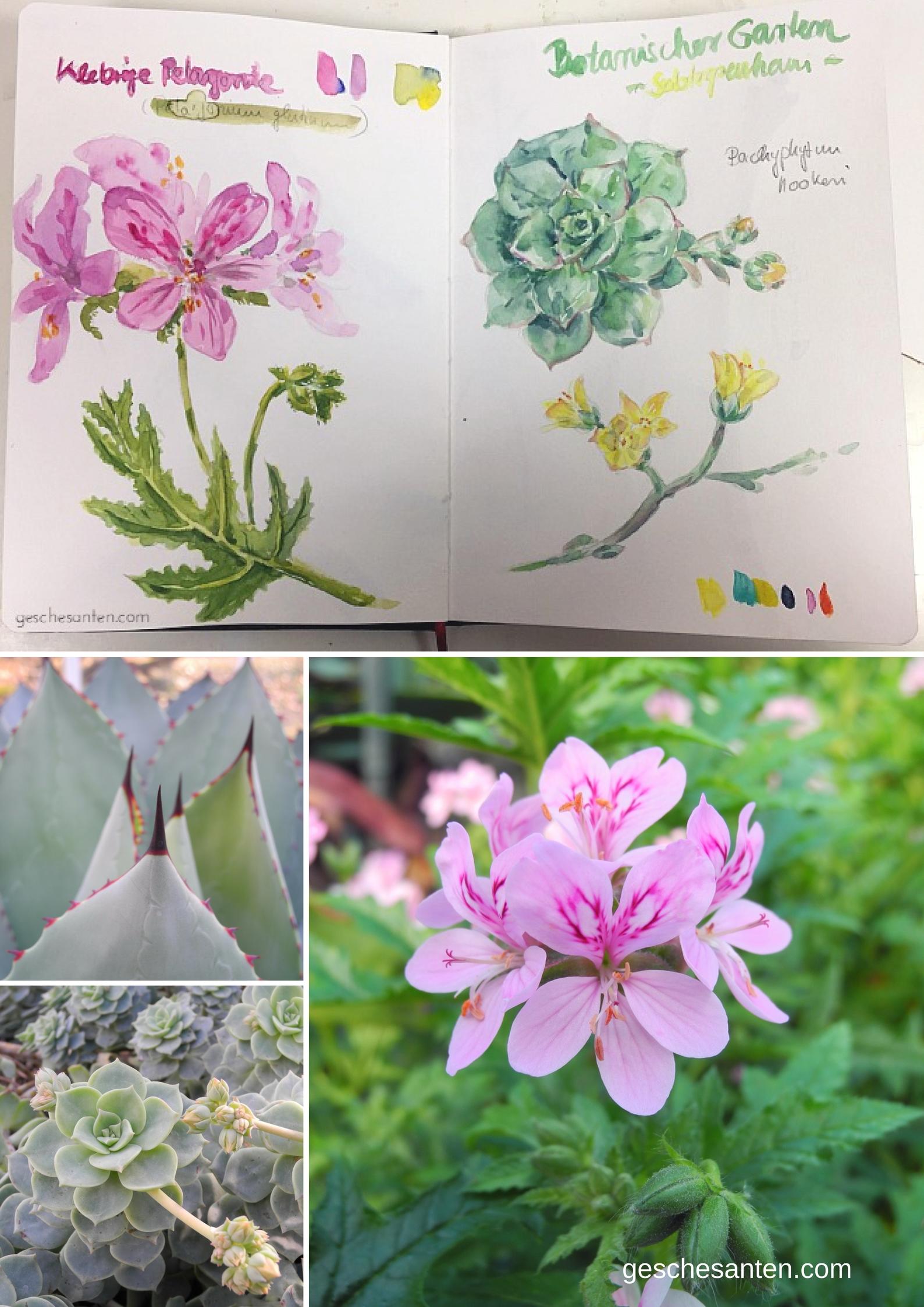 Naturskizzenbuch - Tropenhause, Subtropenhaus, Botanischer Garten