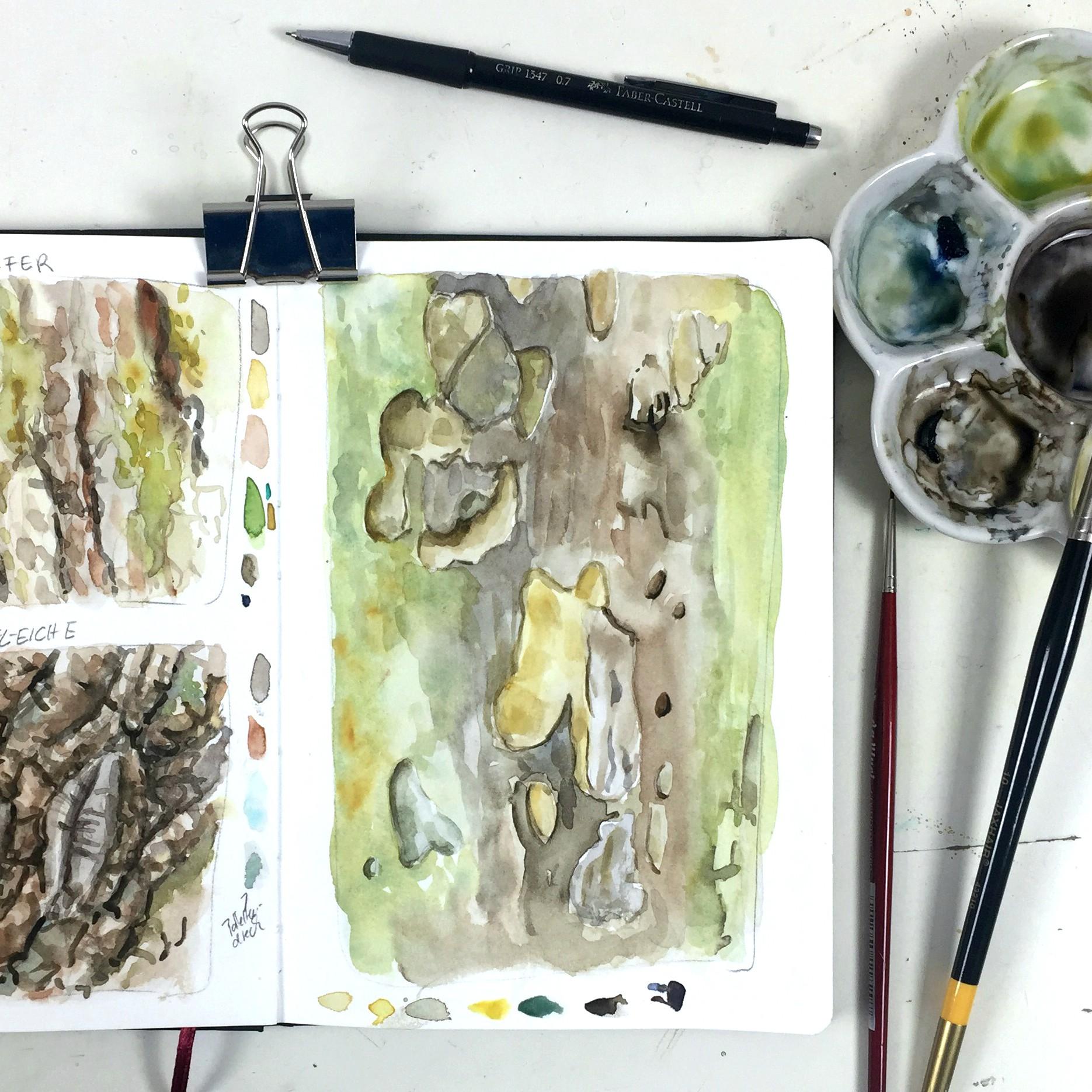 Baumrinde in Aquarell – Winterideen für Dein Naturskizzenbuch