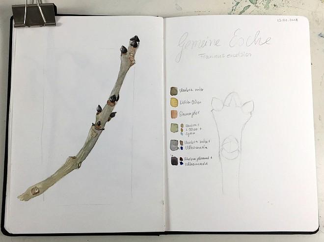 Zweige und Knospen in Aquarell – tolles Thema für Dein Naturskizzenbuch im Winter. Damit Du gleich losforschen und malen kannst, gibt es ein kostenlosen Exkursionsführer als PDF zum Herunterladen