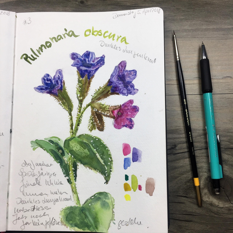 5 gute Gründe dieses Jahr ein Naturskizzenbuch zu beginnen