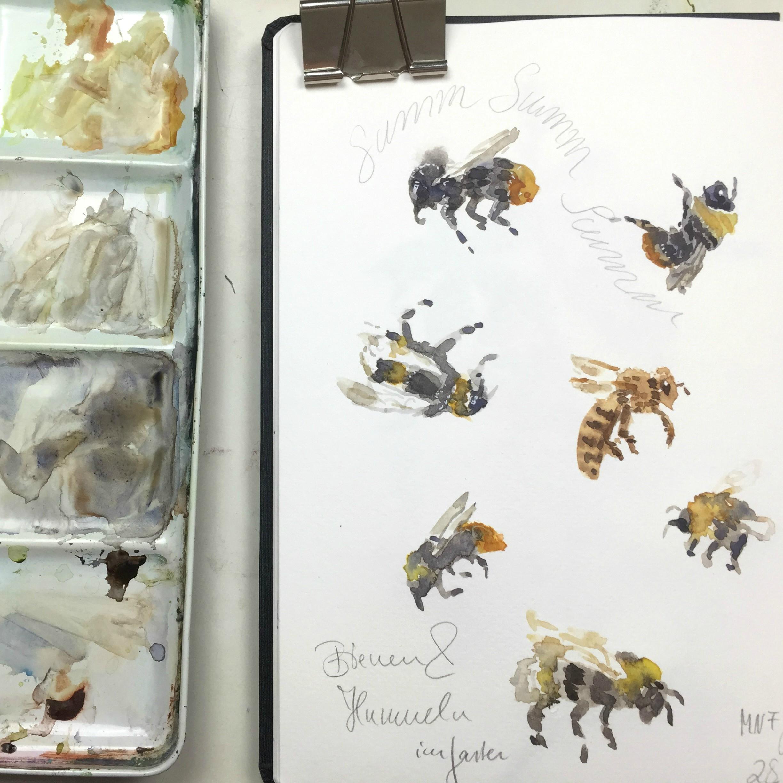 Bienen und Hummeln im Naturskizzenbuch