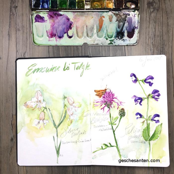 Mein Naturskizzenbuch Sommer 2018 – Wildblumen in Aquarell