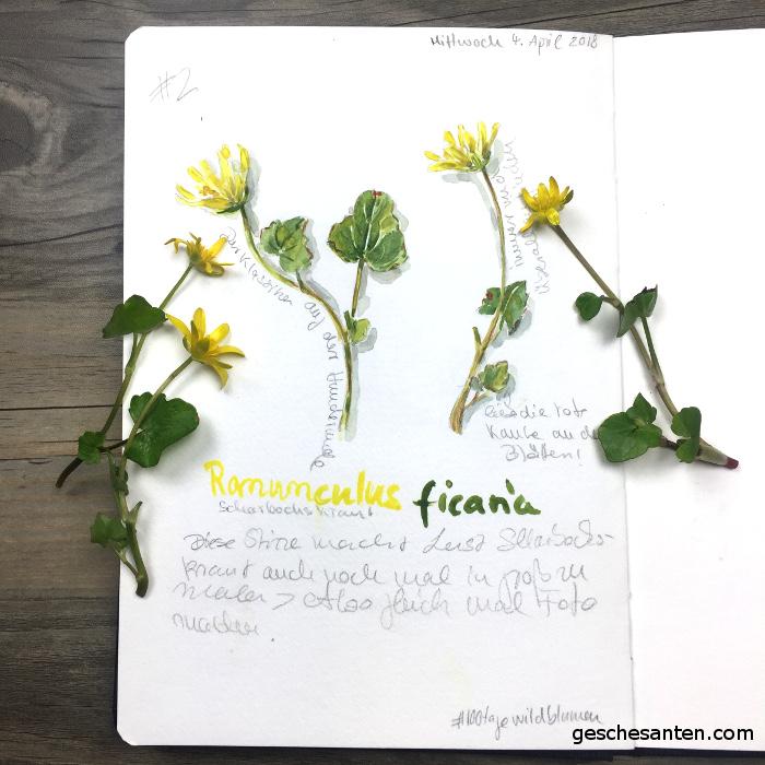 Skizzenbuch Aquarell - Botanische Studien