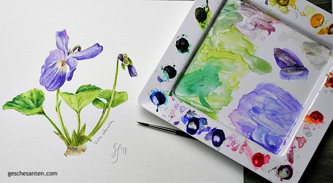 Veilchen in Aquarell - Violett in watercolor: Botanische Aquarelle malen