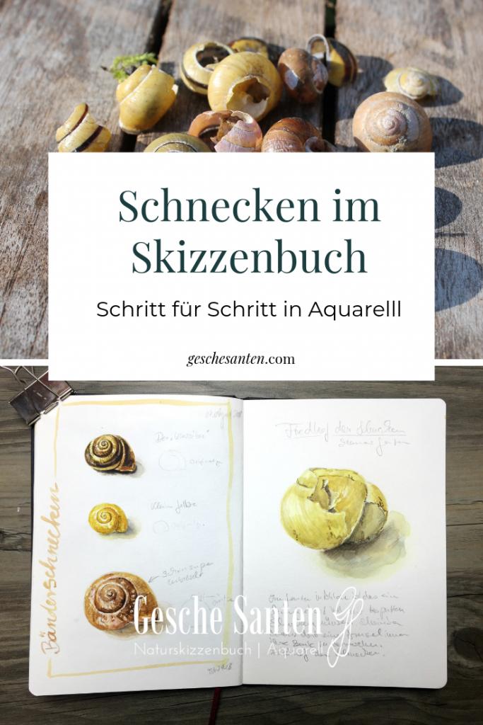 Schnecken im Skizzenbuch. Schritt für Schritt Schnecken in Aquarell malen - Gesche Santen Blog