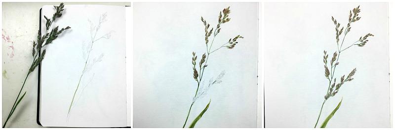 Gräser zeichnen und Malen Skizzenbuchinspiration - Gesche Santen Blog