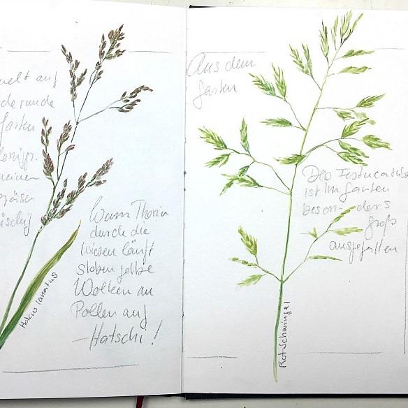 Ab auf die Wiese! Gräser im Naturskizzenbuch
