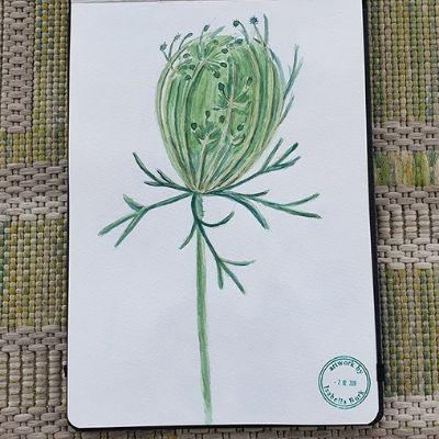 Einblicke ins Skizzenbuch– malende Naturforscherinnen erzählen: Isabella