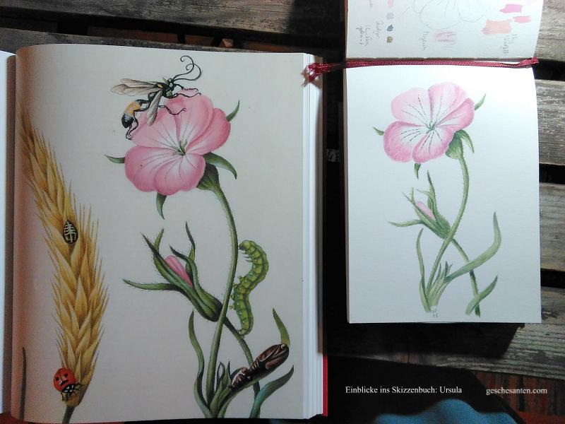 Botanische Aquarelle, Skizzenbuch und nature journal Erfahrungsberichte und Geschichten
