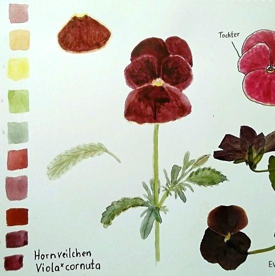 Einblicke ins Skizzenbuch – malende Naturforscherinnen erzählen: Eva