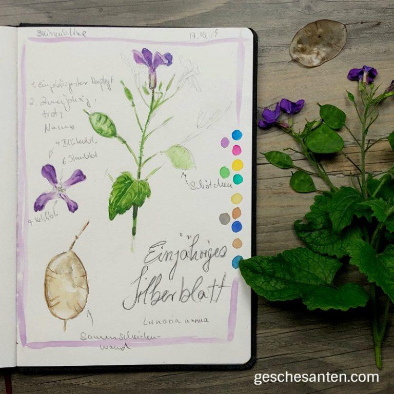 Silberblatt in Aquarell- Kleine botanische Studie im Skizzenbuch