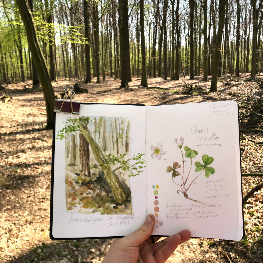 Nature Journal, Naturskizzenbuch Ideen im Wald. Sauerklee in Aquarell